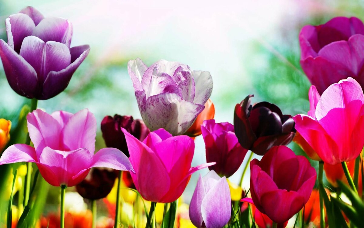 Картинки со цветами, трахать нужна фото