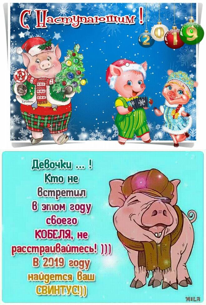 Открытки прикольные с наступающим годом свиньи