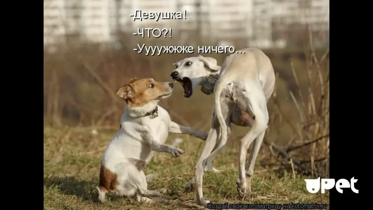 Днем, смешные картинки с надписями про собак и людей