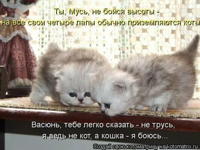 Картинки смешные до слез с котами и надписями