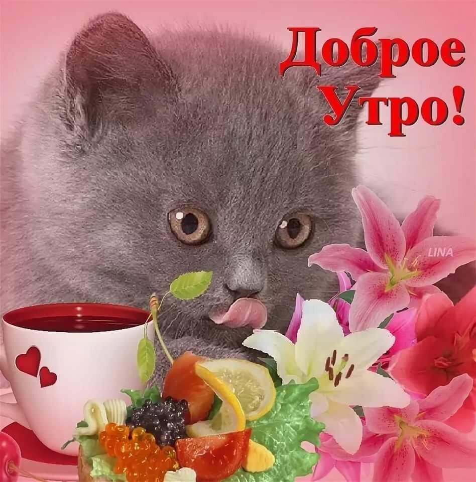 живем, открытка с пожеланием доброго утра милой существа постепенно
