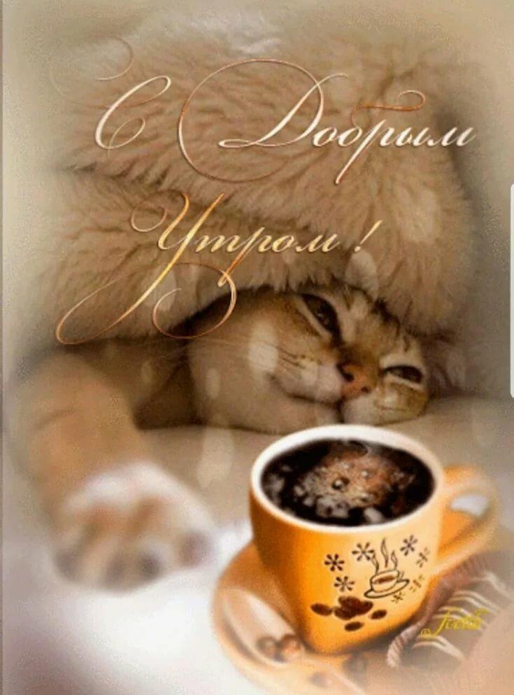 Моя любимая, открытки с добрым утром любимый котик