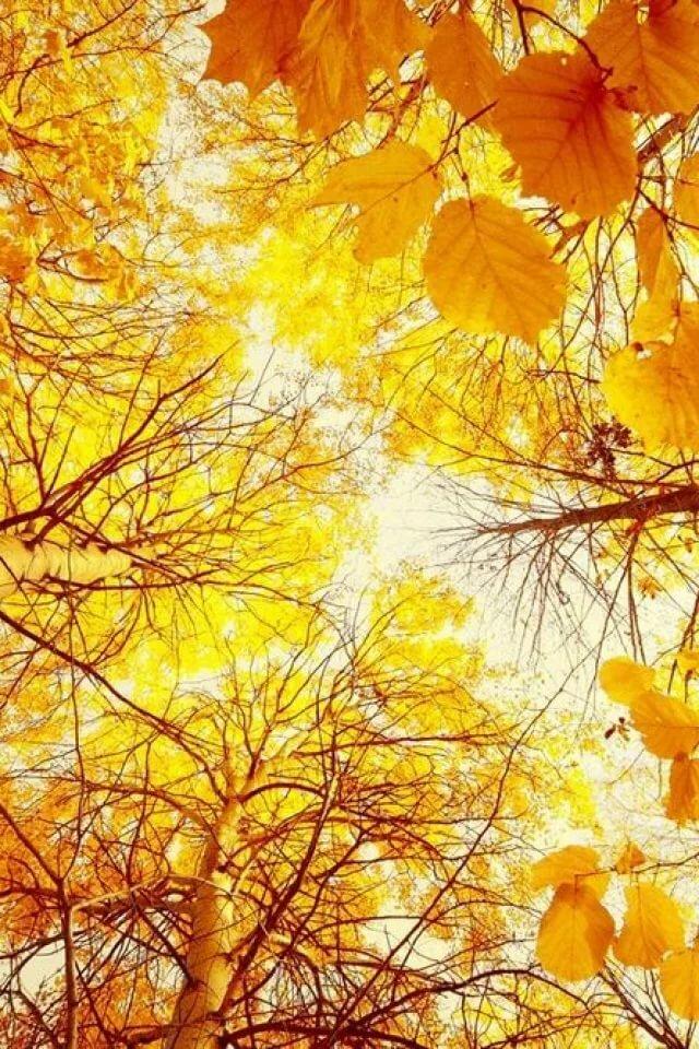 Дню педагога, открытка солнечная осень