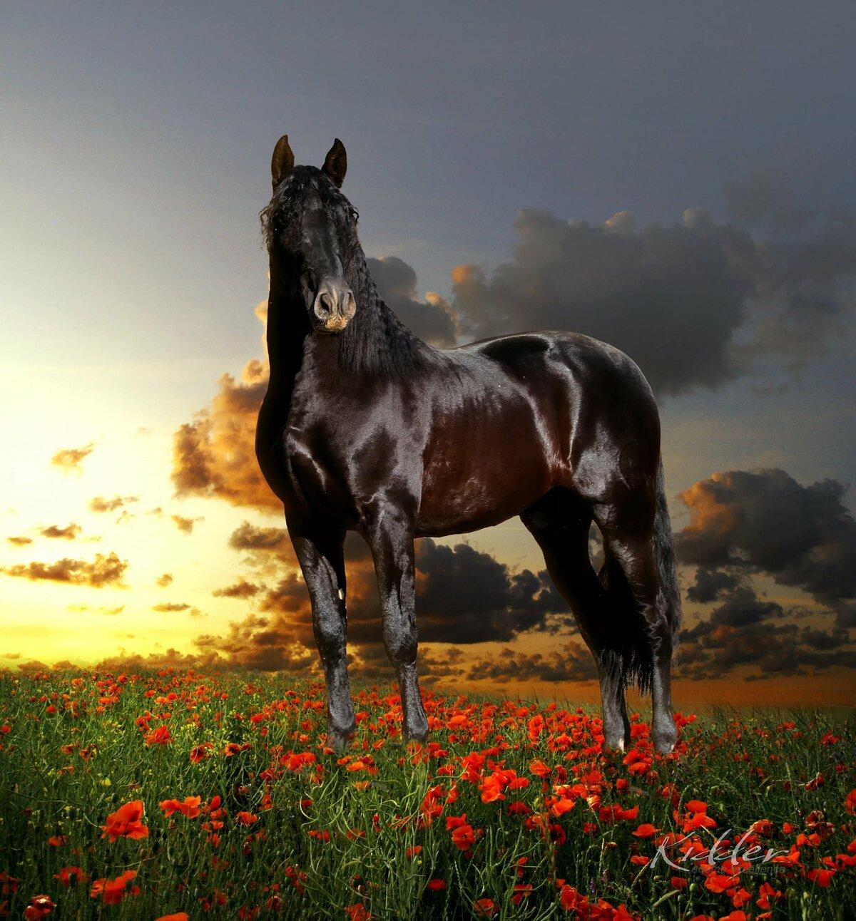 Лошади кони картинки