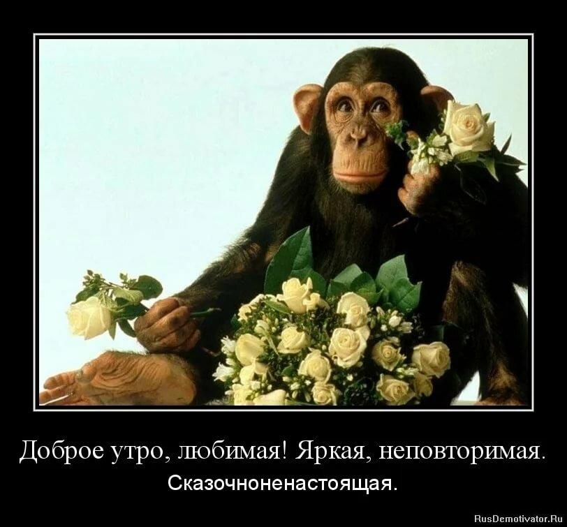 Поздравлением днем, доброе утро любимый картинки красивые с надписью прикольные с шимпанзе