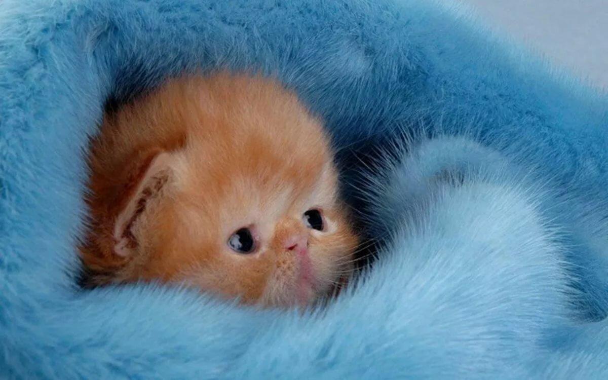 Смешные котята в картинках, подарок открытка