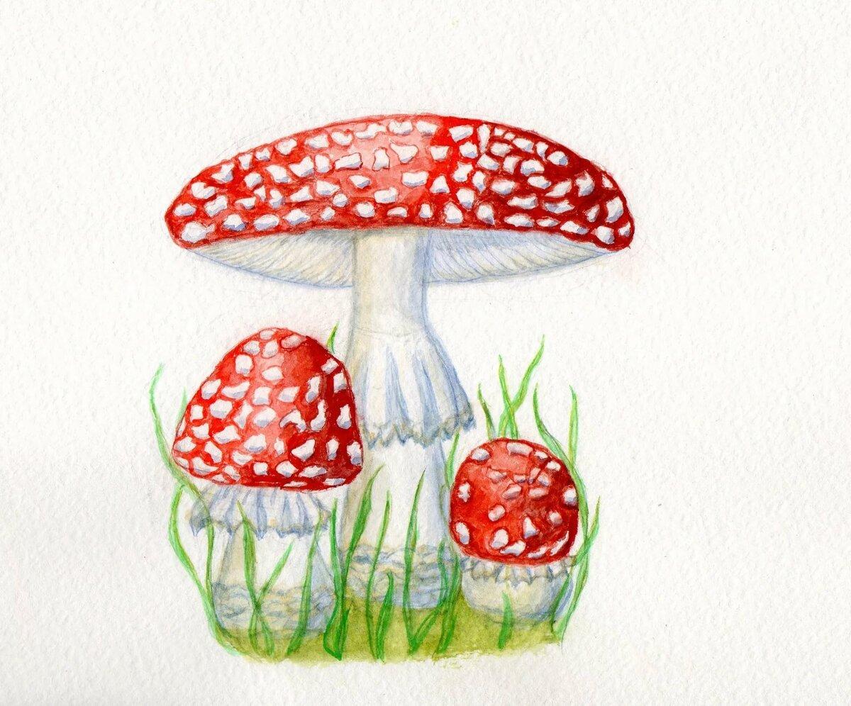 можно рисуем грибы картинки фото традиционное арабское