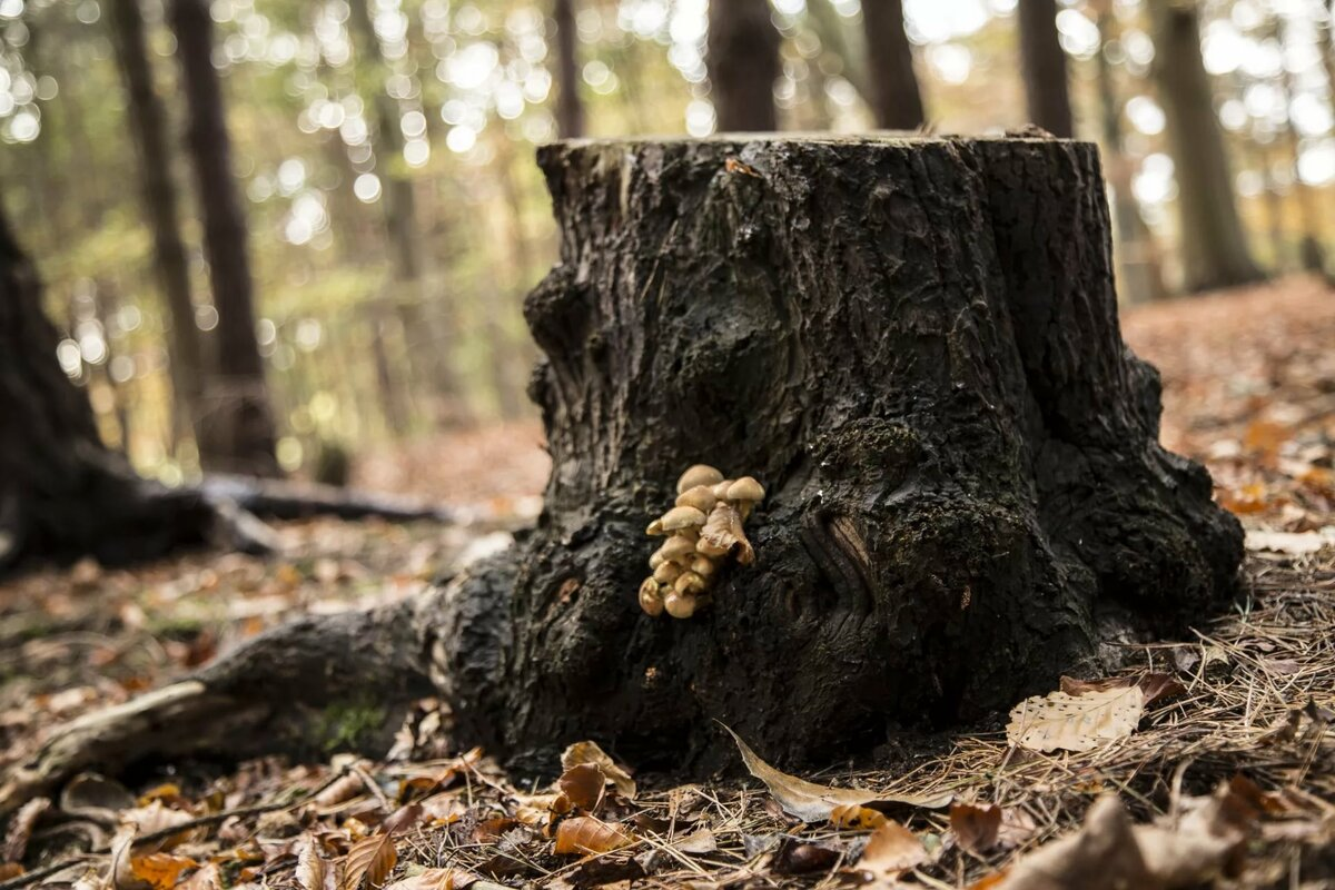 картинка деревья пенечки усиления можно рисовать