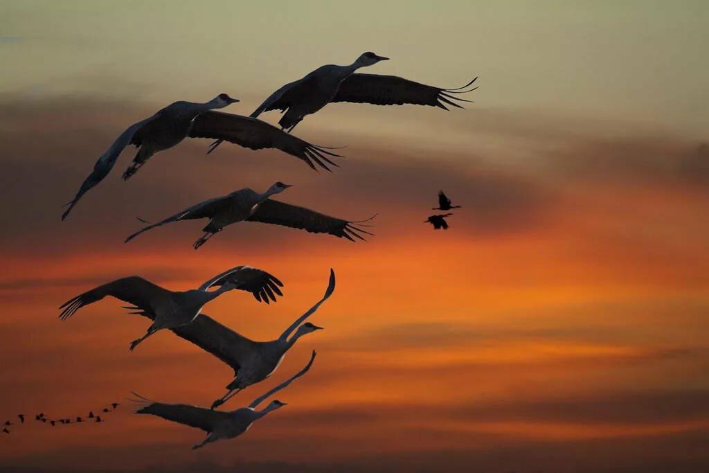 картинки с летящими птицами красивые того, чтобы