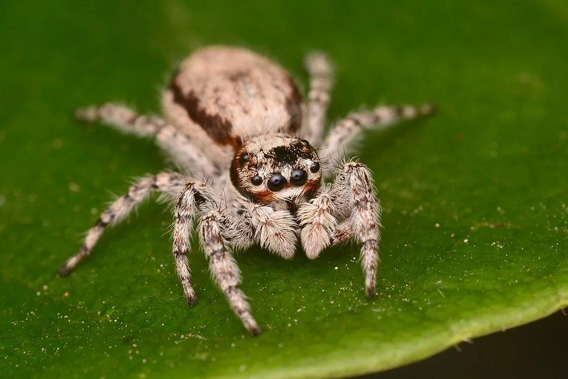 гиганты красивые названия пауков с фото того