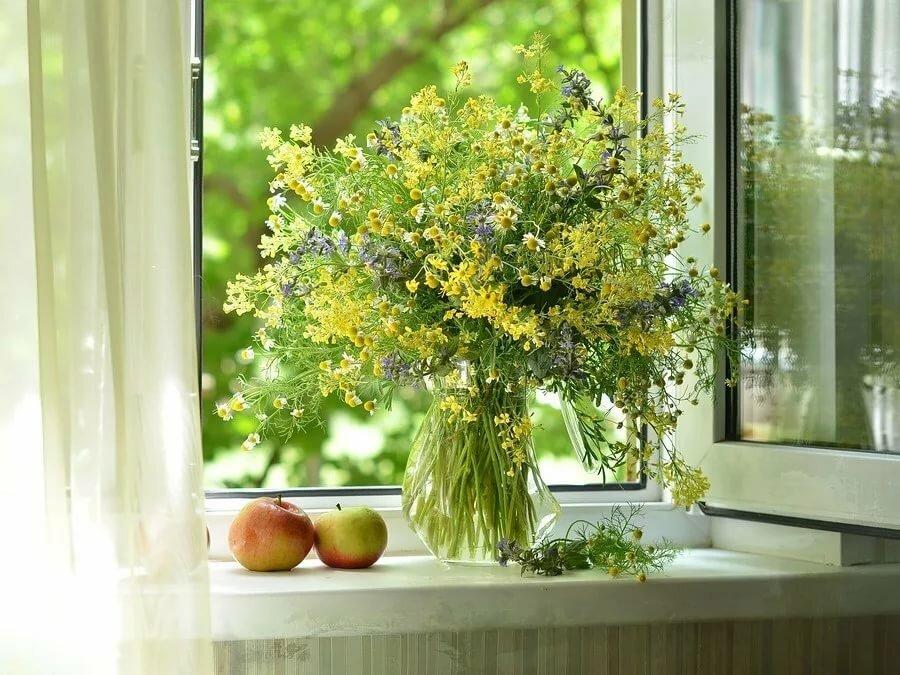 картинки окна с растениями автора не-а
