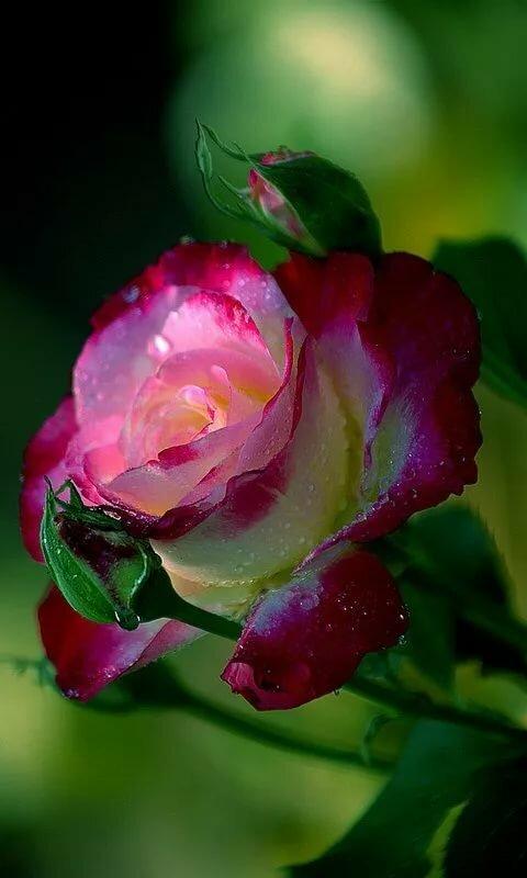 вот красивые необычные цветы картинки анимация данном уголке можно