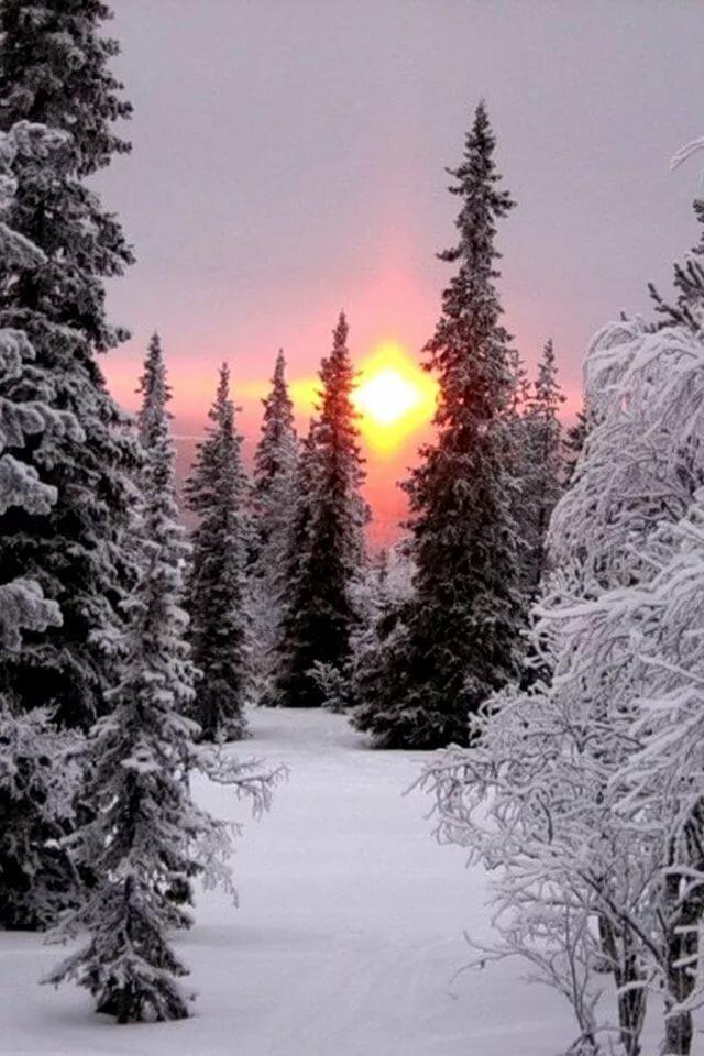 вертикальное фото красоты зимы именно