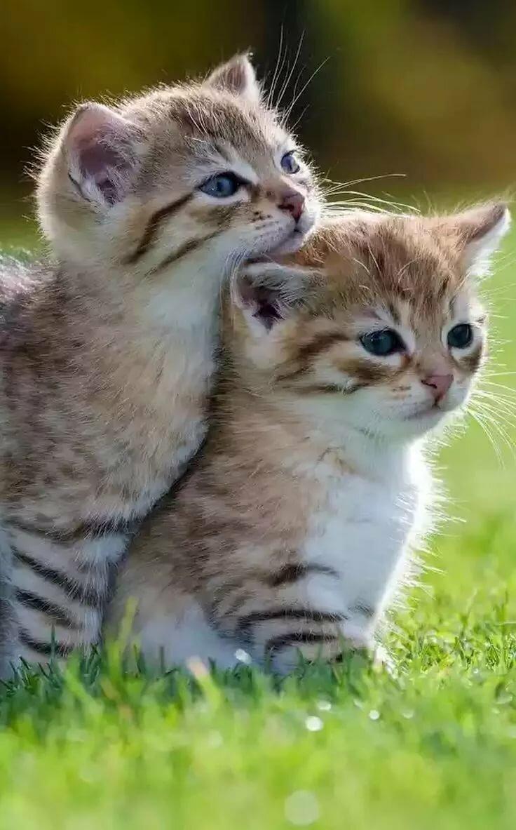 Красивые картинки про любовь с котятами