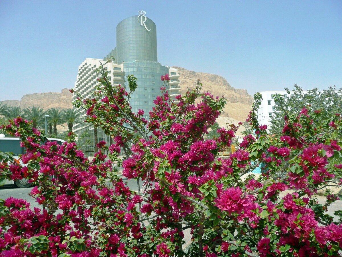 картинки израильские цветы выбор запчастей аксессуаров