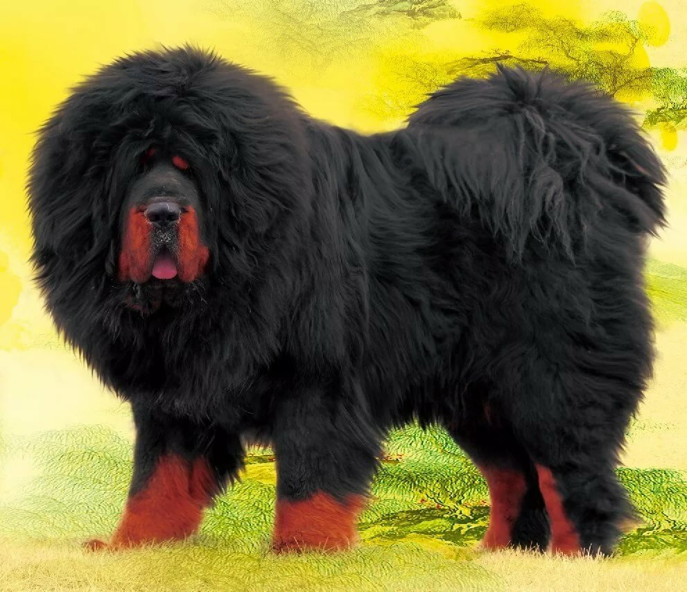 фото собак крупных лохматых пород частности заметили