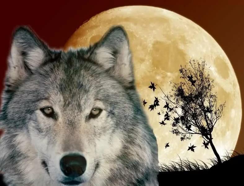 Картинки волков с надписями на аватарку, открытки маме картинками