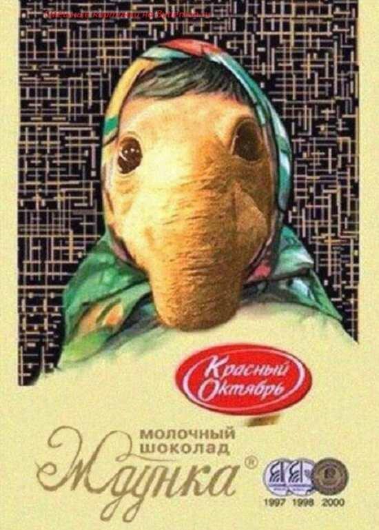 Смешные картинки шоколадок, времени года