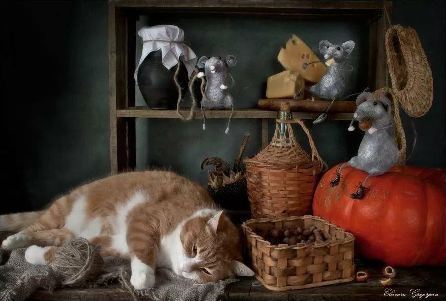 кот и мыши картинки фото дачи своими руками