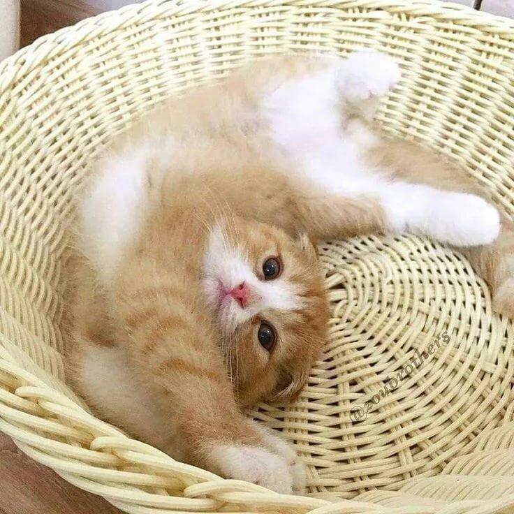 Pin by Evania ✨ on A d o r a b l e Cats, Kittens, Animals