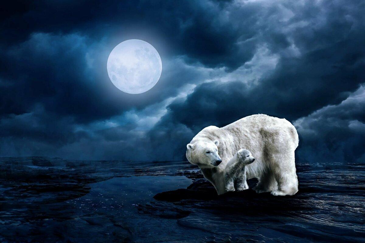 строительство картинки белых медведей фэнтези вид плетения