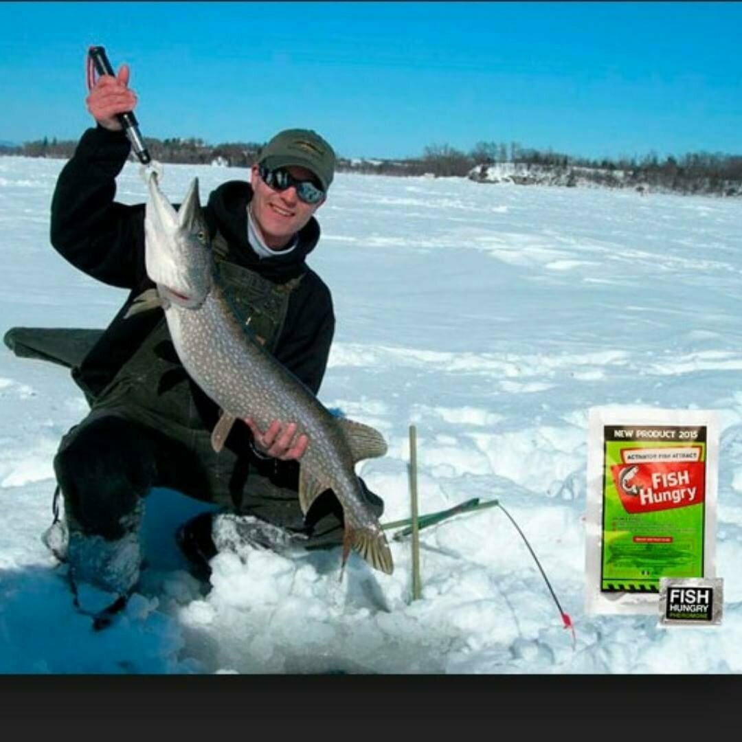 Зимний активатор клёва Fish Hungry в Бутурлиновке