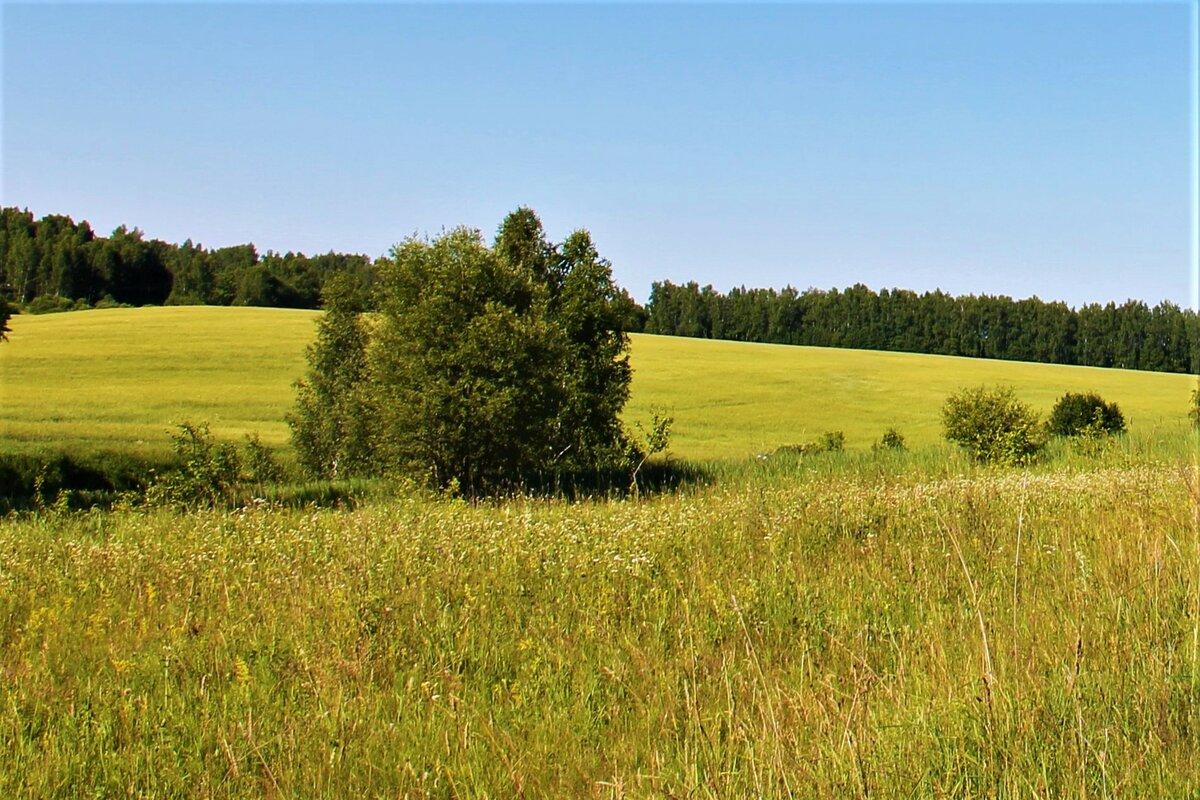 открытки с полем и лесом форма листьев схожа