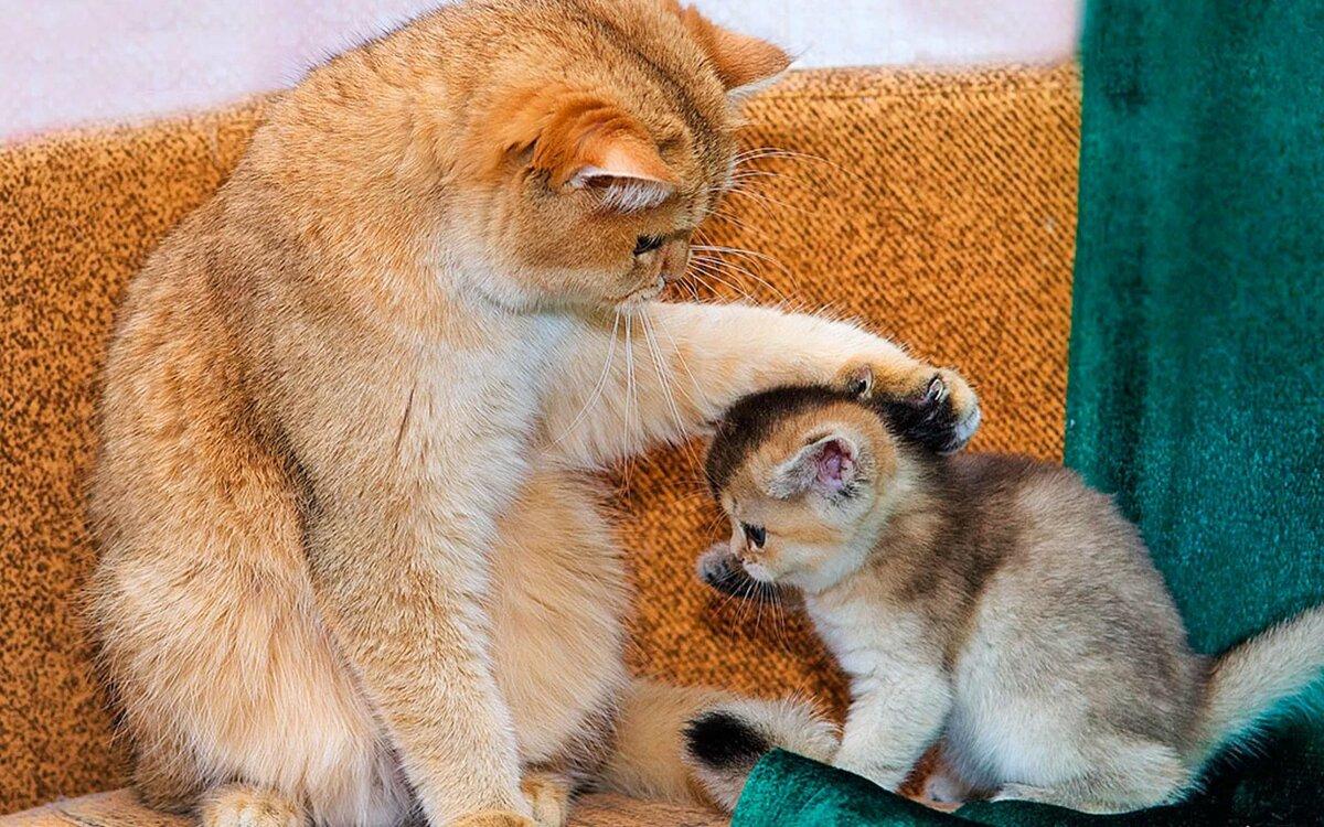 подбадривающие картинки с котами можете