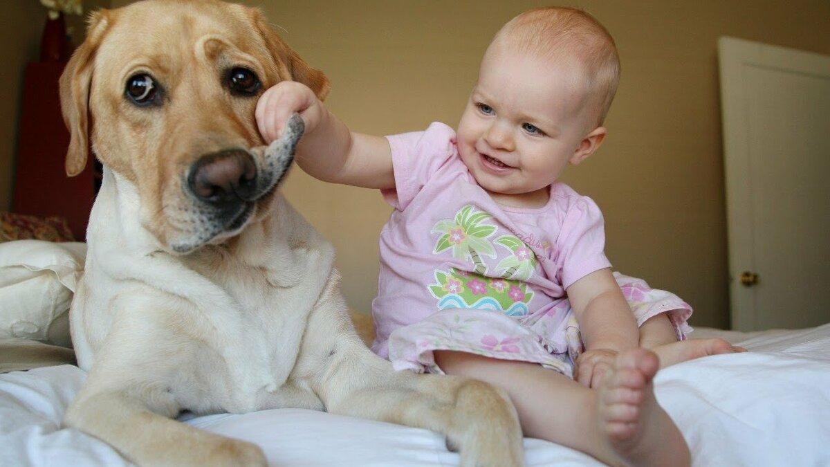 Самые смешные картинки с детьми и животными, поздравление днем рождения