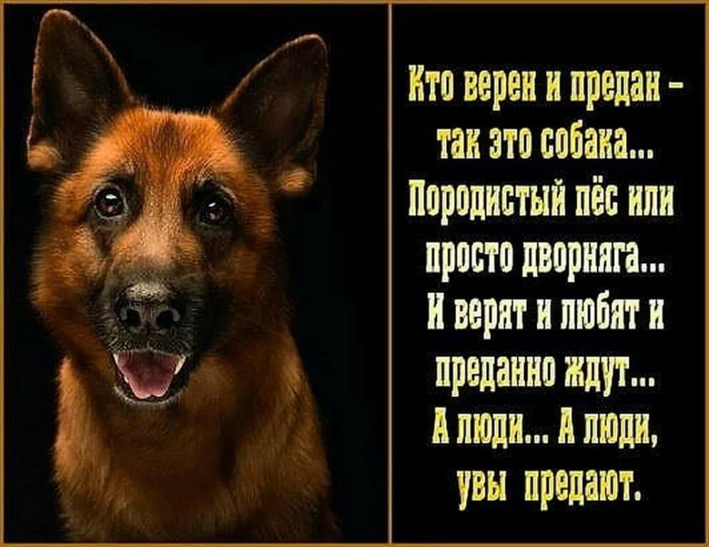 Надписью, открытки про верность собак