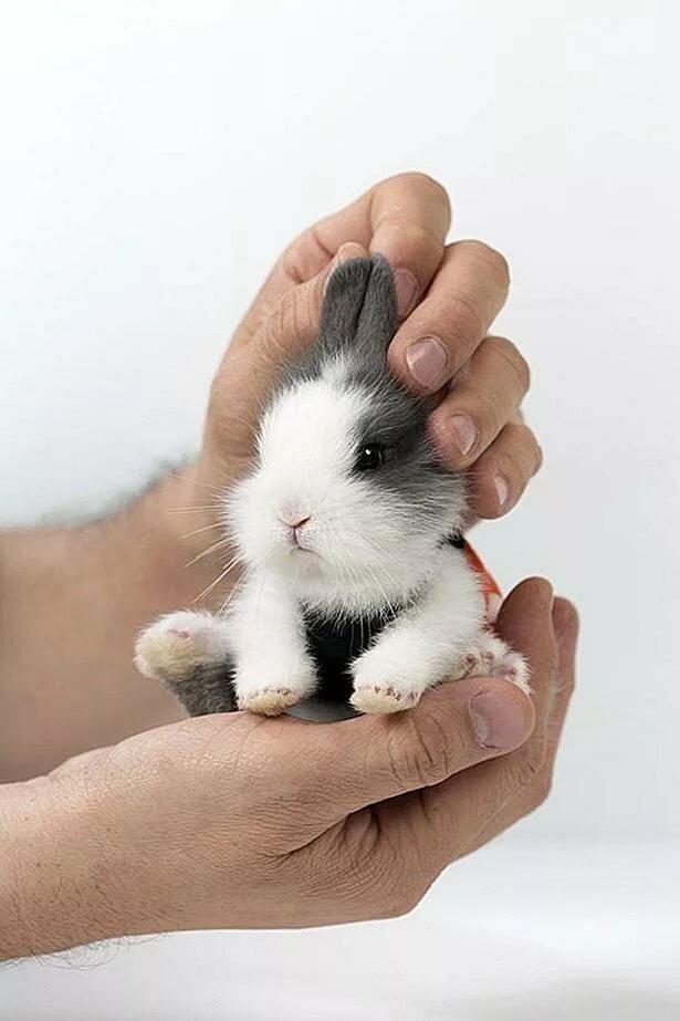 Картинки новорожденного кролика
