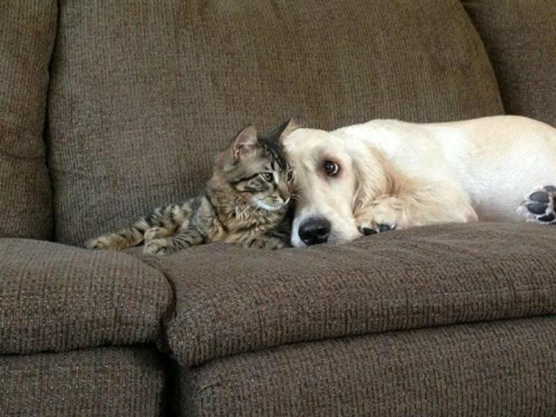 Картинки кошки и собачки прикольные, картинках