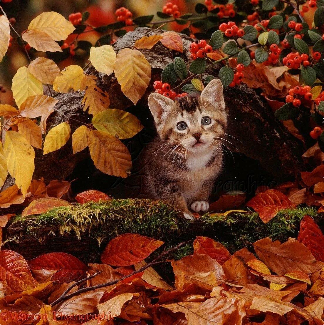 Открытки день, открытки кота с осени
