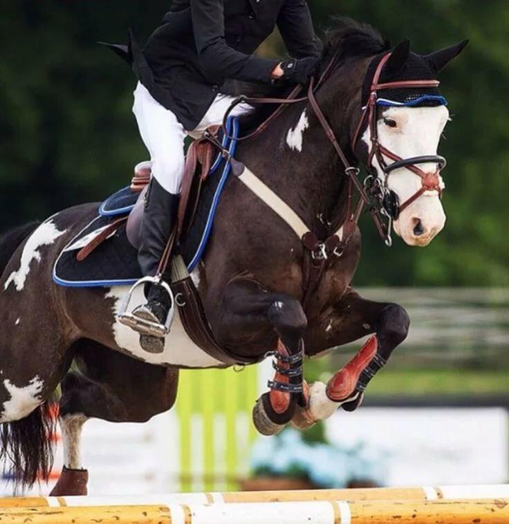 собраны как фотографировать конный спорт новых