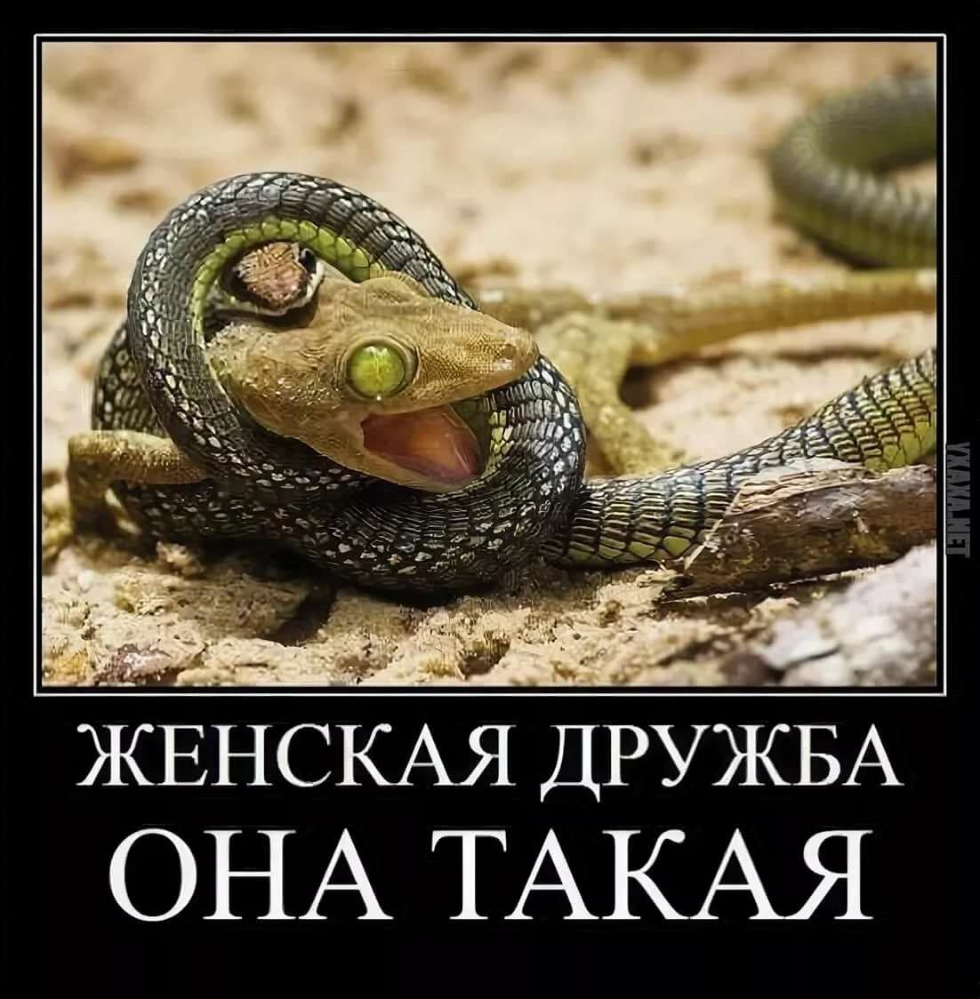проверенных склочный коллектив картинка со змеями нет