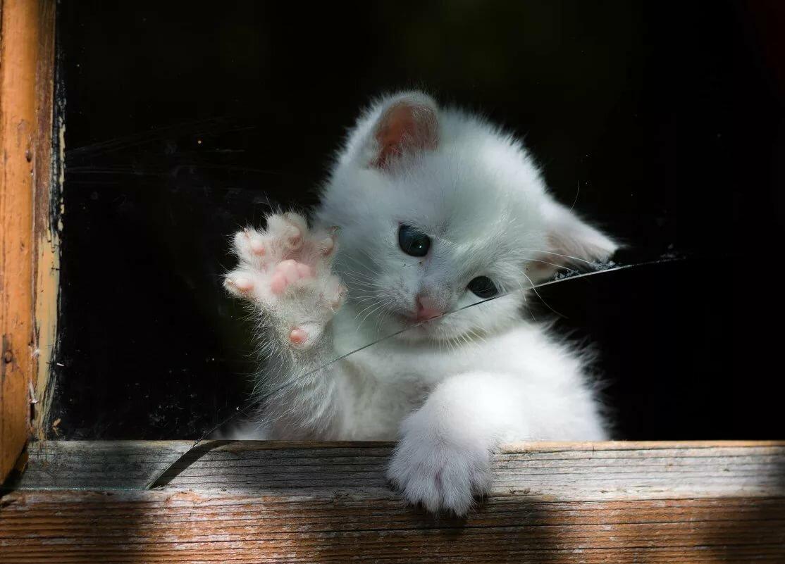 стресс картинки котенок машет белый или