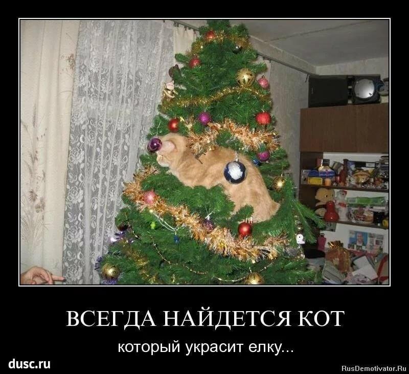 Картинки после нового года смешные с надписями