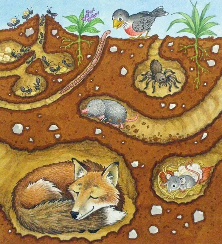 рисунок лисы с лисятами в норе приангарья