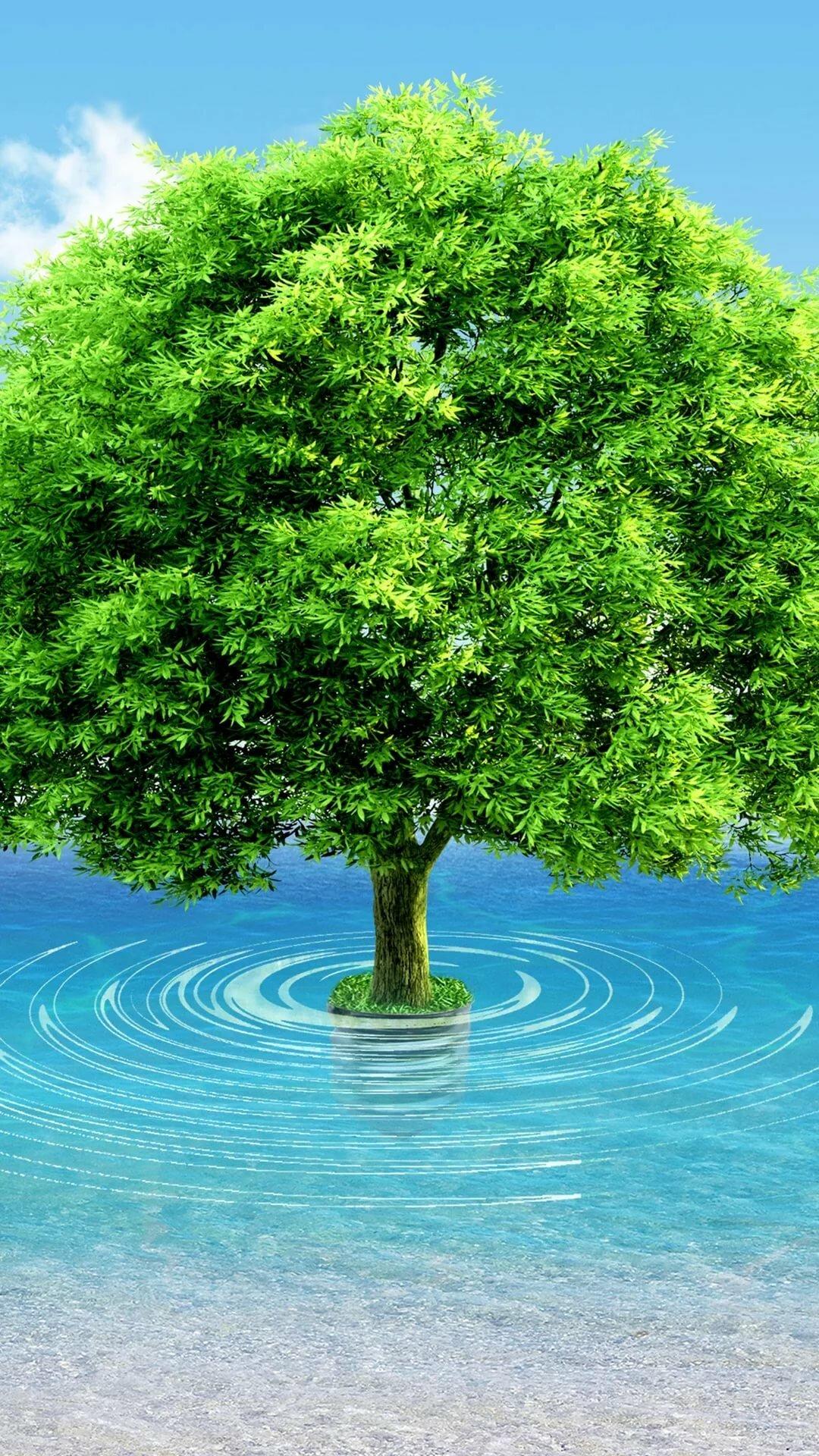 цветоводов рисунок с деревом и водой это одежда, которая