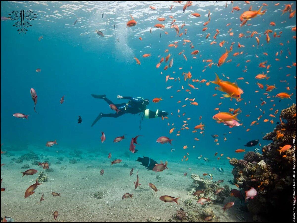 Картинки красное море фото