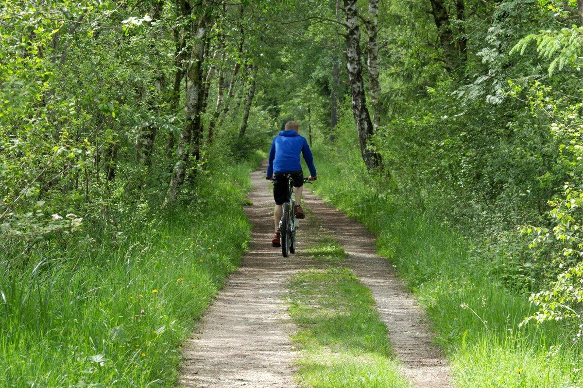 картинки велосипедиста в лесу светлана