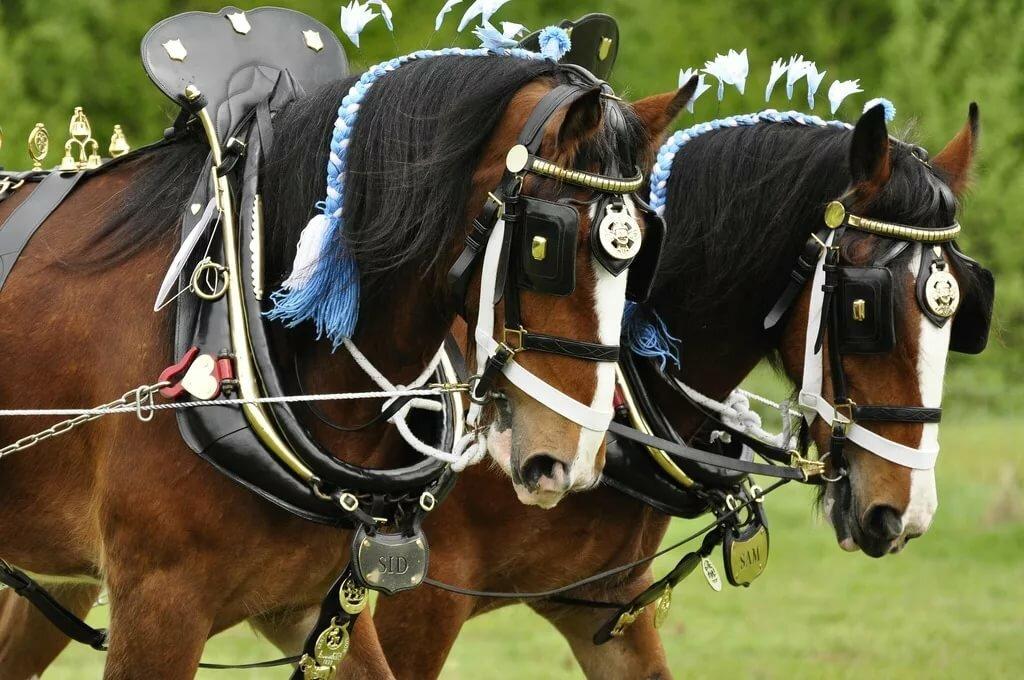 Картинки упряжка для лошадей