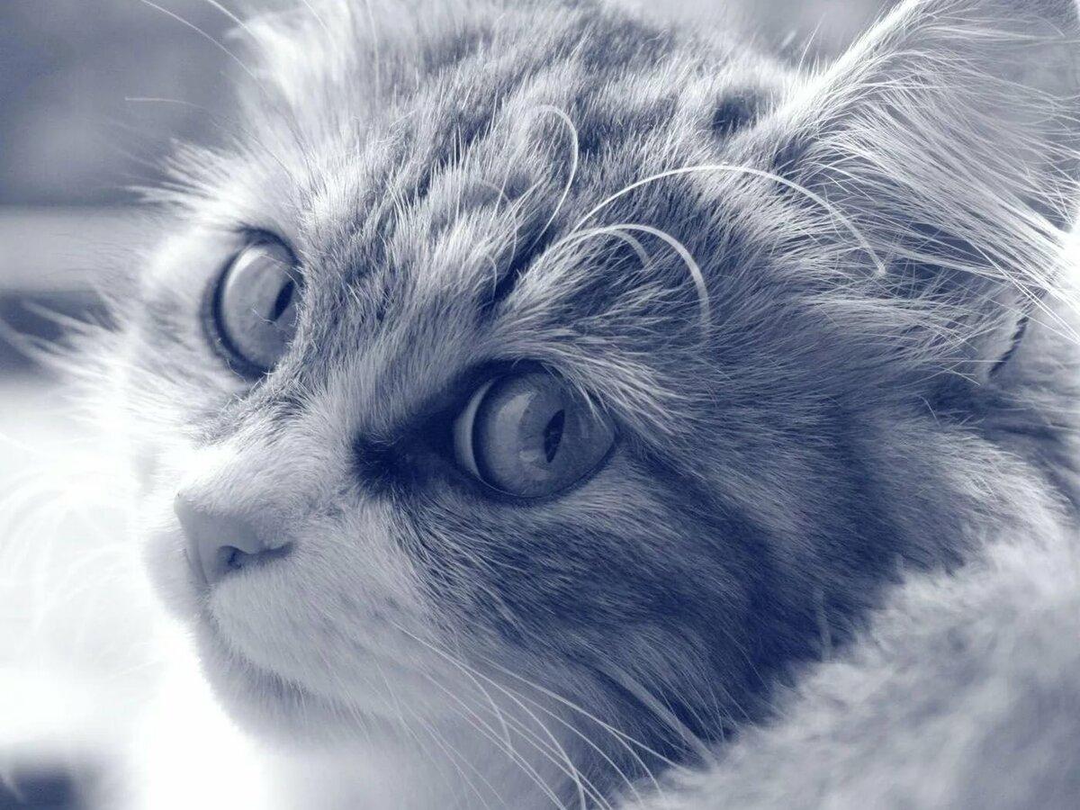 Коты картинки на аву, открытки