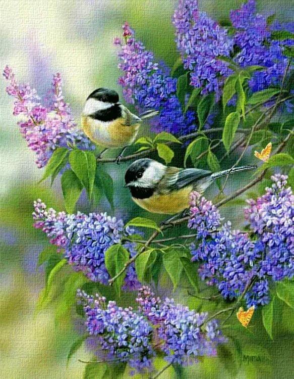 Сделать легкую, доброе утро очень красивые открытки природой и птицами