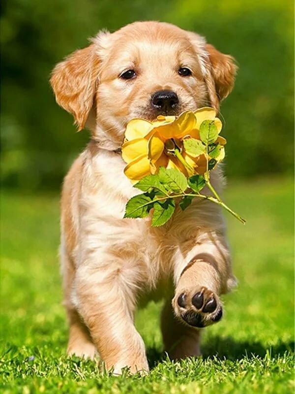 Белочками, красивые собачки открытки