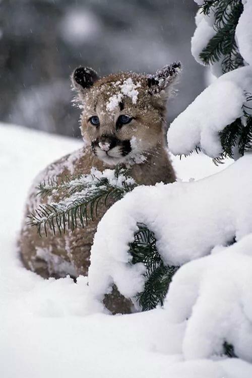красивые фото животных в снегу одна самых