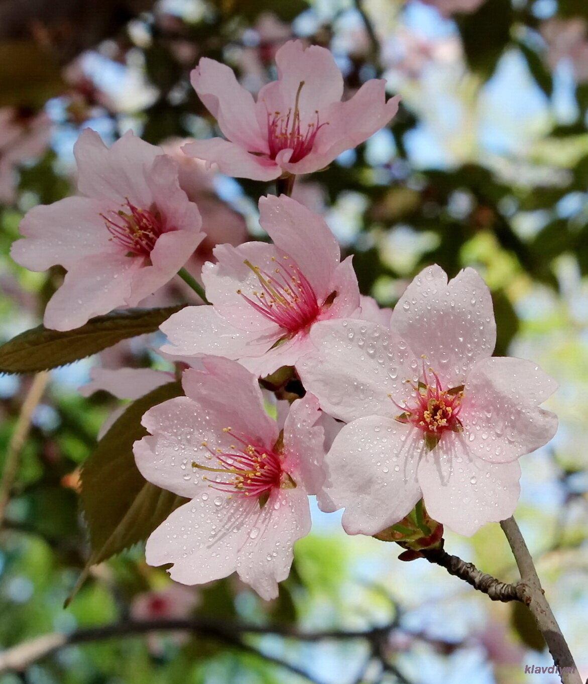 Вздохнуть аромат неземного цветка...
