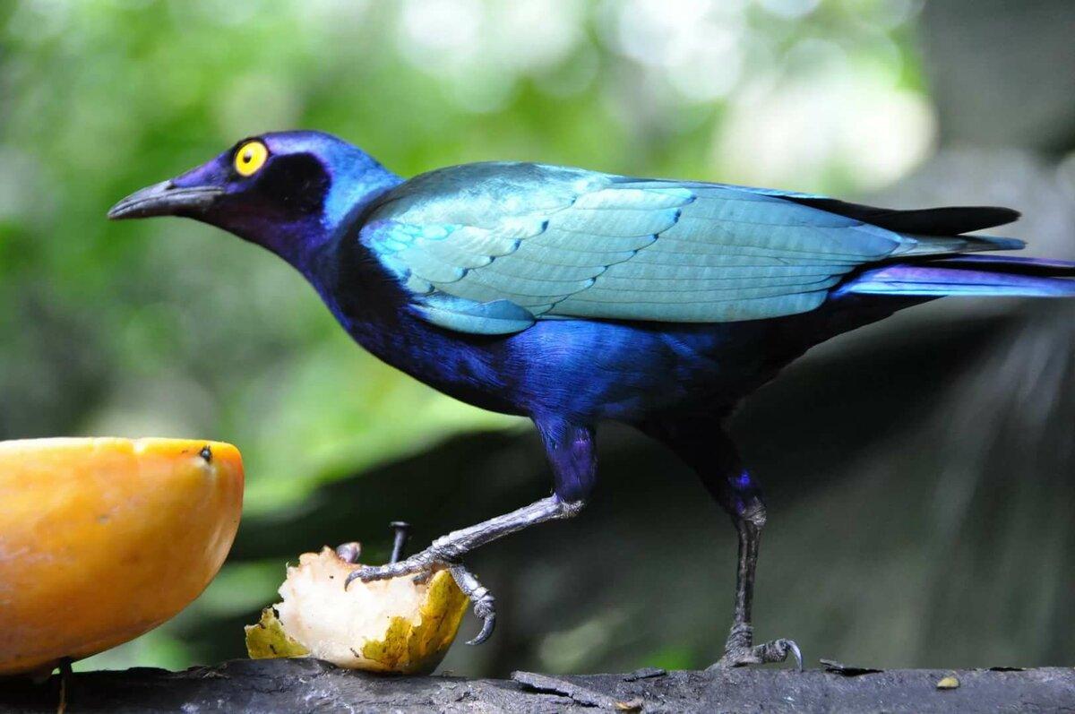 Тропические птицы картинки с названиями