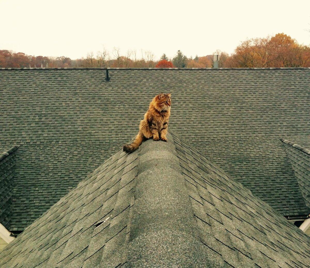 Прикольные картинки кот на крыше