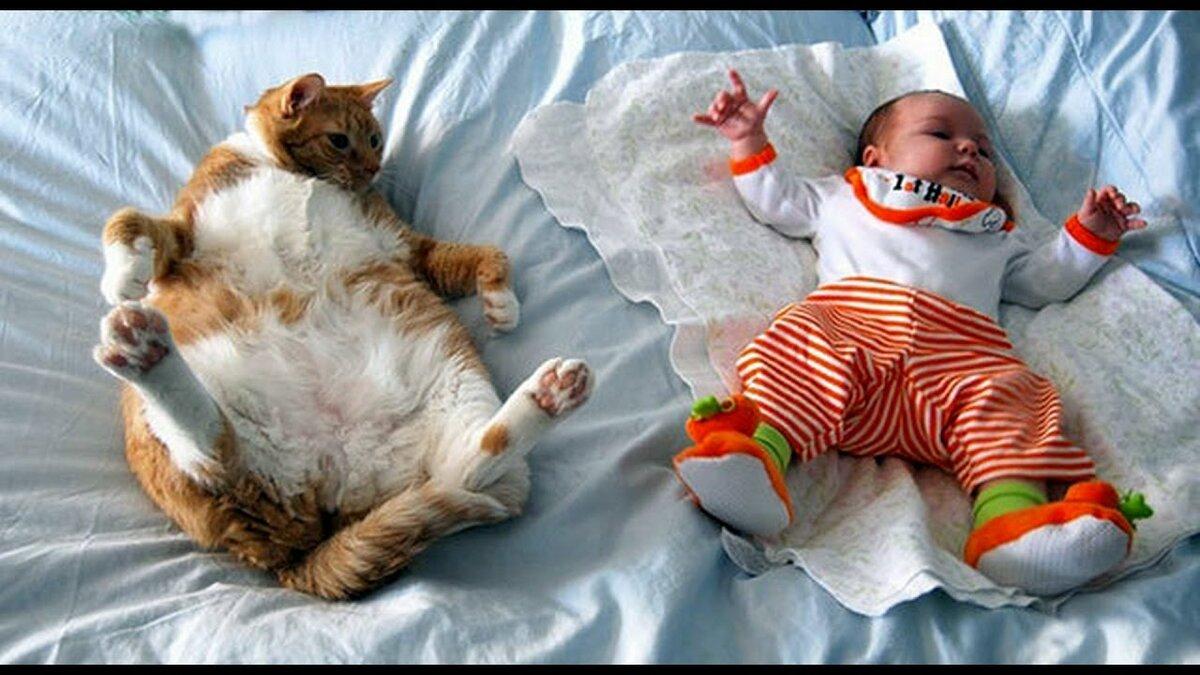 Картинка с кошками для детей смешное